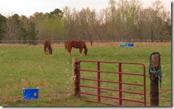 Horses Hanging Out 001 (Small)