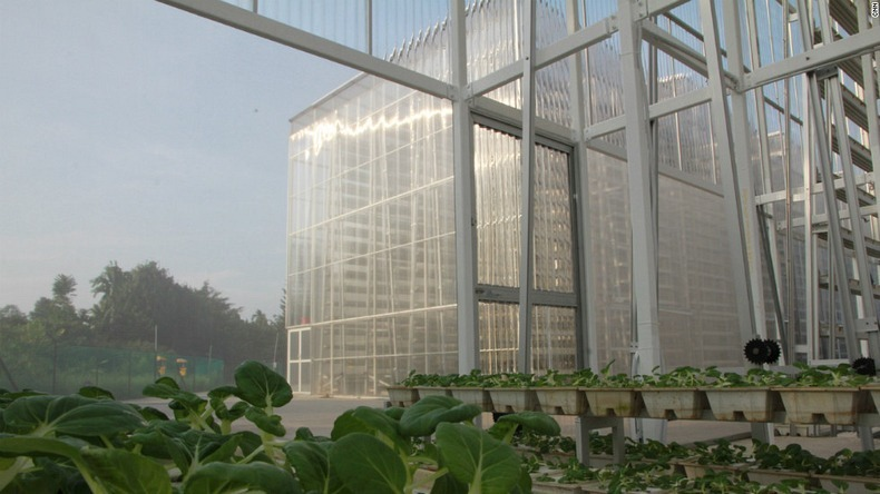 skygreens-vertical-farm-8