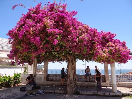 15. Flori in Lisabona.JPG