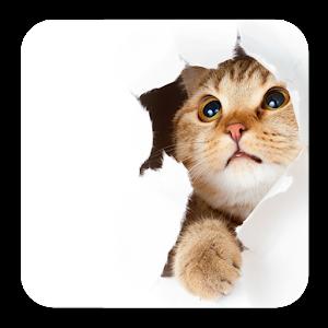 А был ли котик: слова на фото for PC and MAC