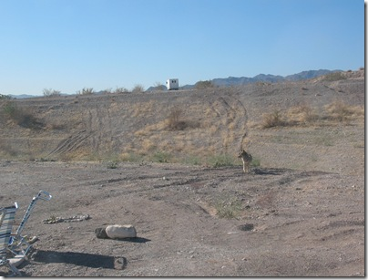 2012-03-10 Lake Mead Coyote Site (2)