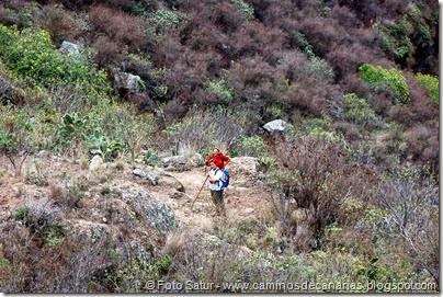 6675 Circular a Firgas-Ruta 4(Camino Capellanía)