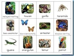 rainforest animals montessori nomenclature cards