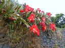 buurmans-cactus.jpg