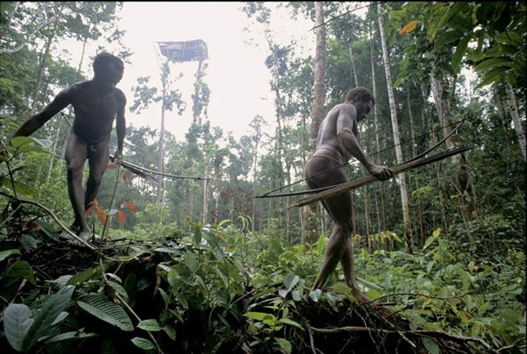 Alizul: THE TREE HOUSES OF THE KOROWAI TRIBE OF NEW GUINEA