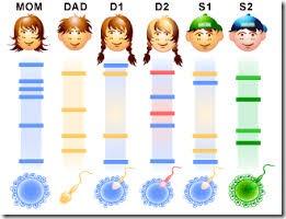 multiple choice quiz on dna fingerprinting or dna profiling