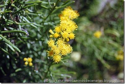 1095 Arteara-S.Fernando(Salado verde