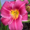 Dark Pink Lilly