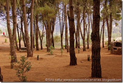 3062 C. de Tejeda-Lomo del Palo