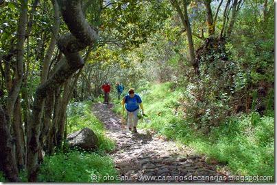 7356 La Laguna-Barranco Laurel(Vueltas Acero)