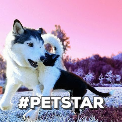 We learn from them not because they are petstar but because the