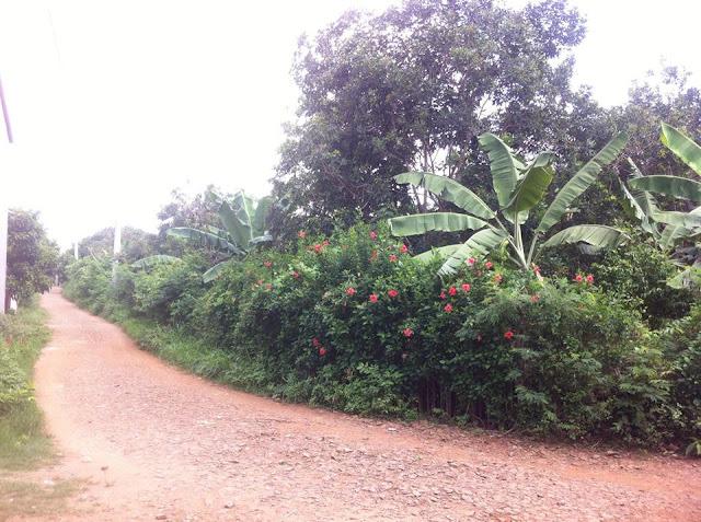 Bán đất rẫy Phú Bình Long Khánh Đồng Nai 02