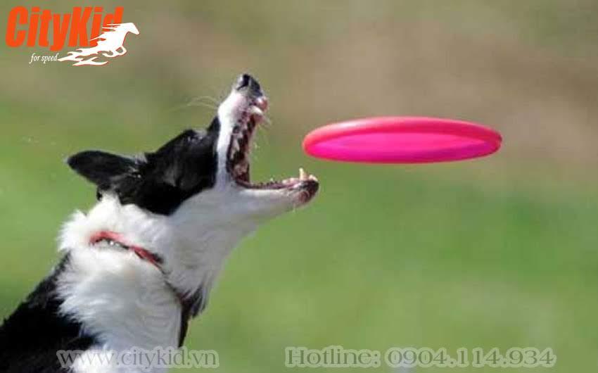 Đĩa bay huấn luyện cho chó