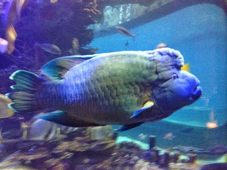 28 George, vedeta acvariului.JPG