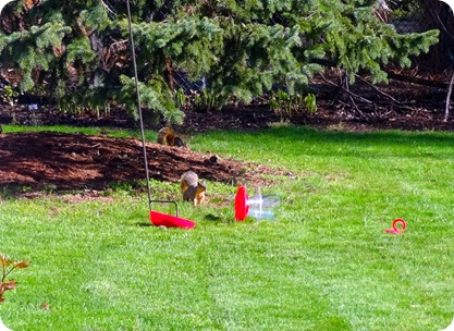 squirrel and feeder