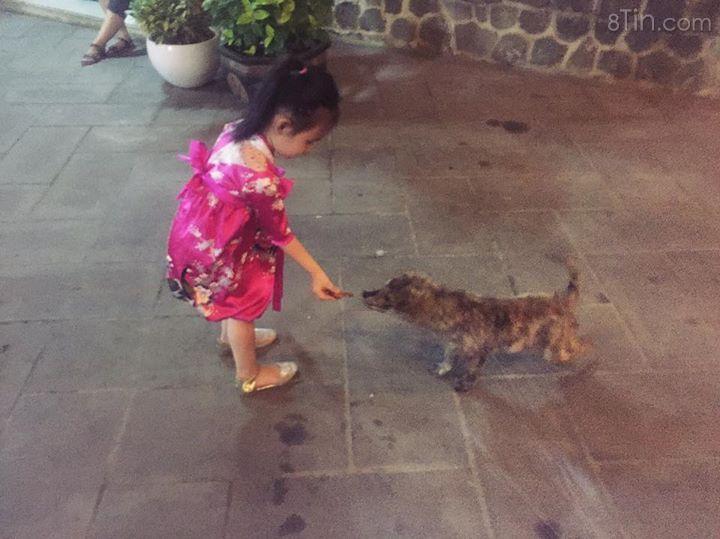 Nhìn Gạo nhảy cẩng lên cười hạnh phúc khi cho con chó