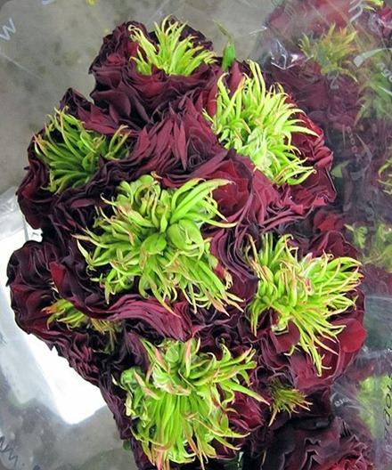 309033_10150400748664808_127n 'Ivan Hoe' rose via San Francisco Flower Mart