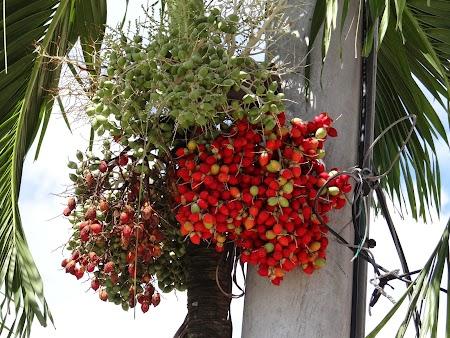 20. Flori tropicale.JPG