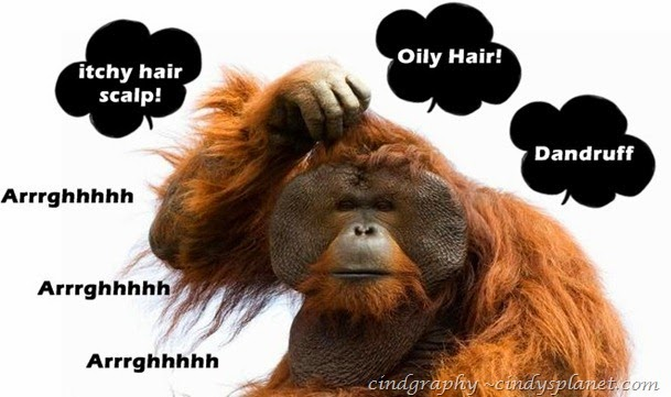 monkey-scratching-head-600x360