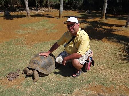 Broasca testoasa din Mauritius