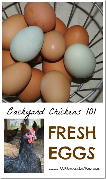 Backyard Chickens 101 - Fresh Eggs