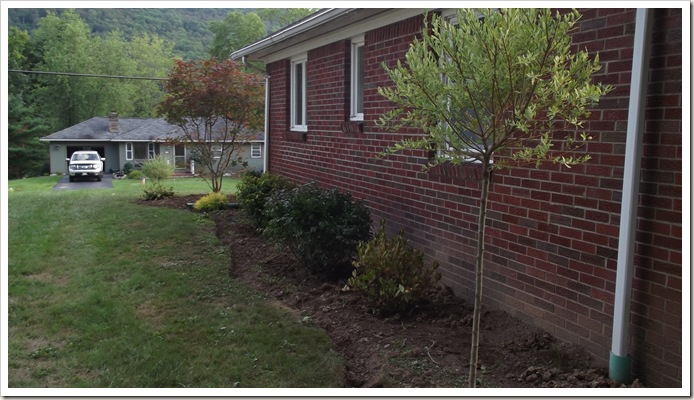 landscaping new plants from lowe's 008