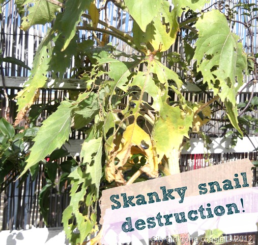 snail destruction