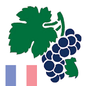 Weinquiz Frankreich