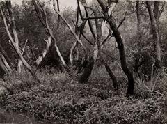 Albert Renger-Patzsch - Erlenbruch an der Mohne - c 1960