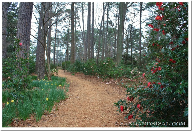 camellia row (1024x683)