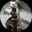 Image Google de edith pollet