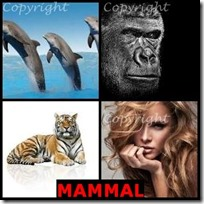 MAMMAL- 4 Pics 1 Word Answers 3 Letters