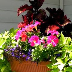 flower box square