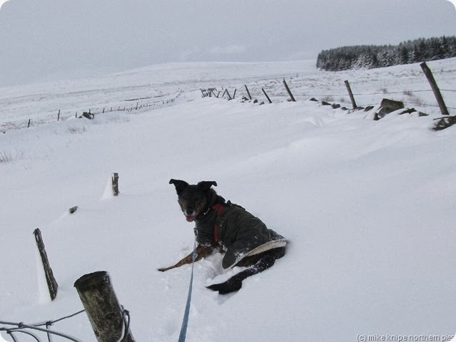 bruno having snow trouble on a previous occasion