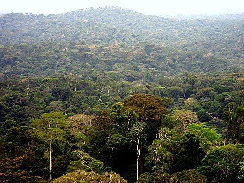 Forêt équatoriale. Photo dentrodeafrica.free.fr