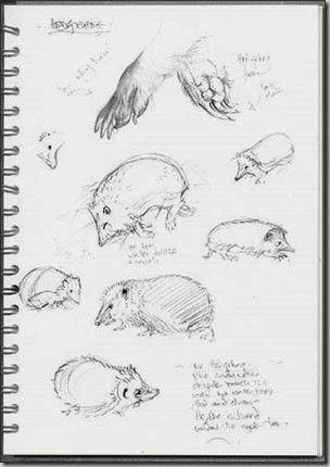 bg hegehog