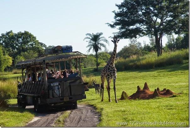 Animal Kingdom - Safari Ride