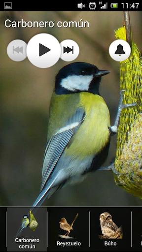 玩免費音樂APP|下載鸟的声音 - 铃声 app不用錢|硬是要APP