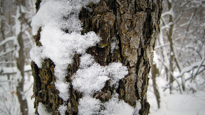 snow and bark on Pipeline Trail in Millcreek Canyon Utah