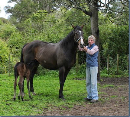 Ann, Frankie That, and foal
