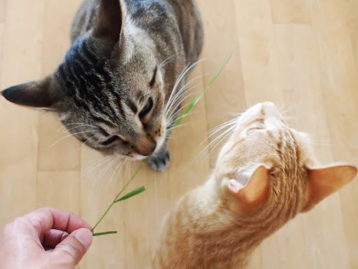[写真]奪い合うようにして草を食べるグスタフとドーラ
