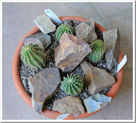 130831_pots_with_rocks_06