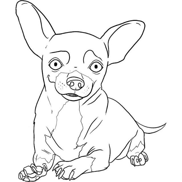 Dibujos Para Colorear Perro Chihuahua Es Hellokids Com