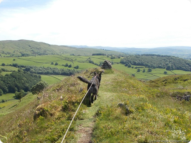 bruno bags hugill fell