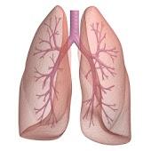 Asthma Tracker & Log (free)