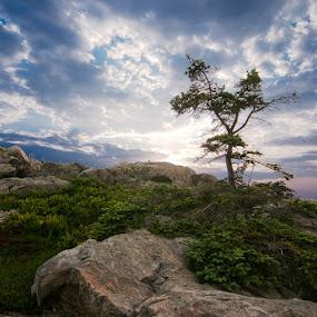 New Day Downeast II by Glen Fortner - Landscapes Sunsets & Sunrises ( new england, maine, acadia, great head, mount desert )