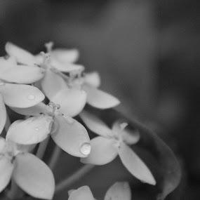 by Kevin Navis - Flowers Flower Arangements