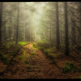 foggy forest by Petr Klingr - Landscapes Forests ( foggy, hdr, trees, way, forest, path, nature, landscape, , #GARYFONGDRAMATICLIGHT, #WTFBOBDAVIS )
