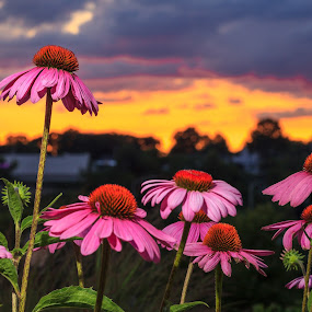 by Jeff Klein - Flowers Flowers in the Wild ( clouds, sky, park, sunset )