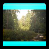 Ze světa lesních samot Kniha